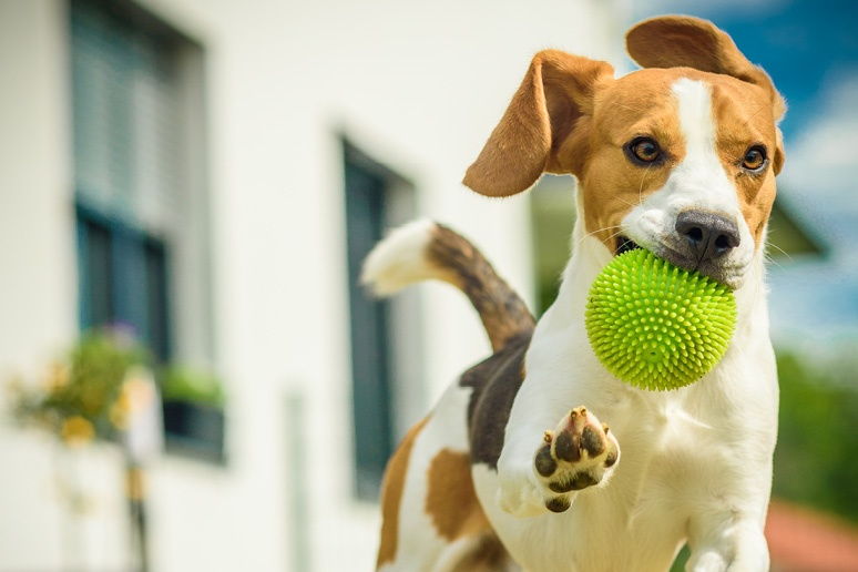 Can a Homeowners' Association Kick out My Dog?